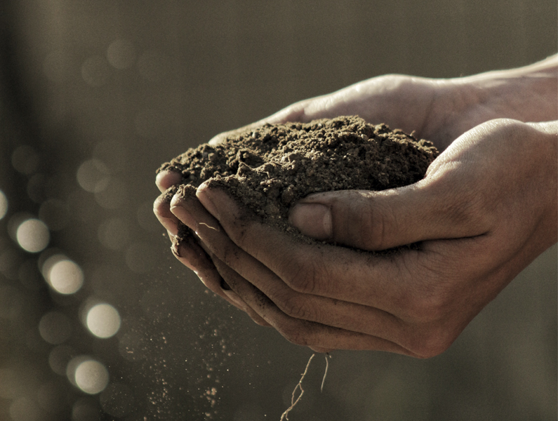 Bio-Baumwolle, Baumwolle, Bio-Kleidung, Nachhaltige Baumwolle, Ökologische Baumwolle, Nachhaltigkeit