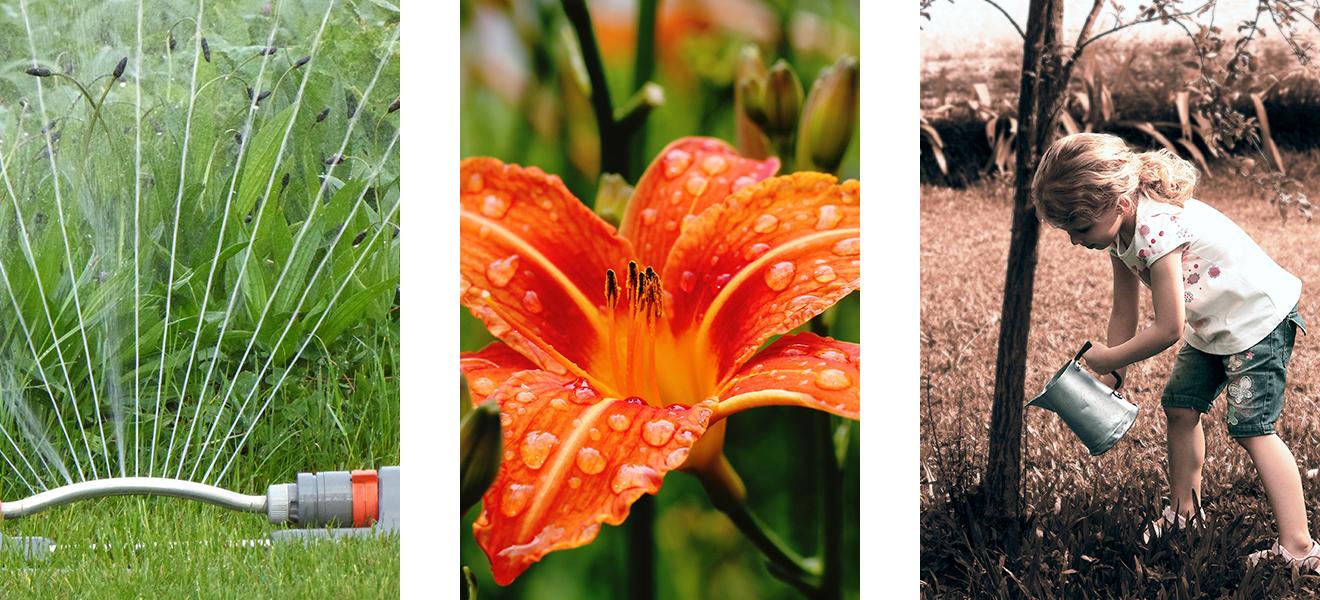 Garten, Wasserverbrauch, Spartipps Wasser, Wasser sparen, Wasserverbrauch, fließendes Wasser, Regenwasser, Gießen, Blumen, Rasen wässern
