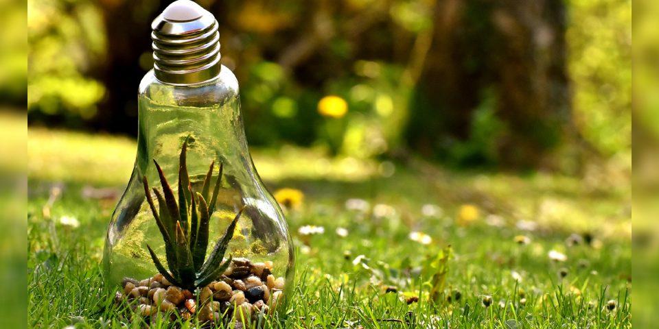 Pflanze in einer Glühlampe auf einer grünen Wiese, Symbol des Ökostrom