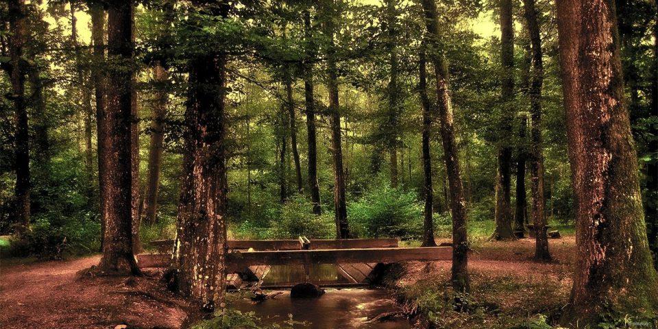 Ruhiger Wald mit Holzbrücke