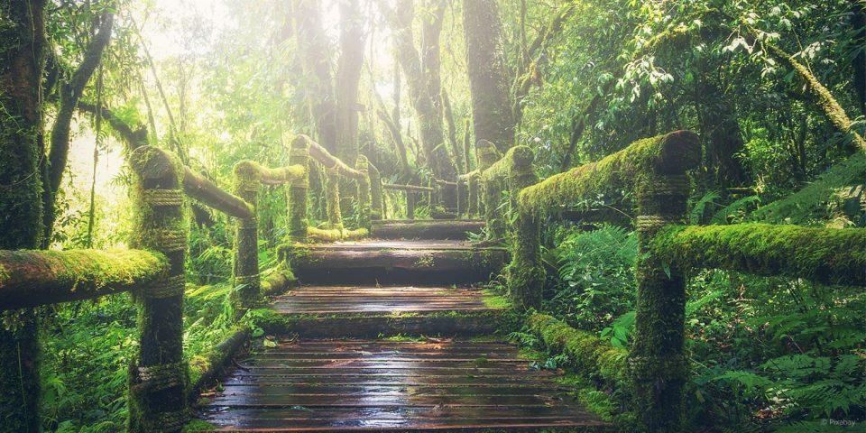 Ein grüner Ort wie die Natur, kann die Stimmung heben