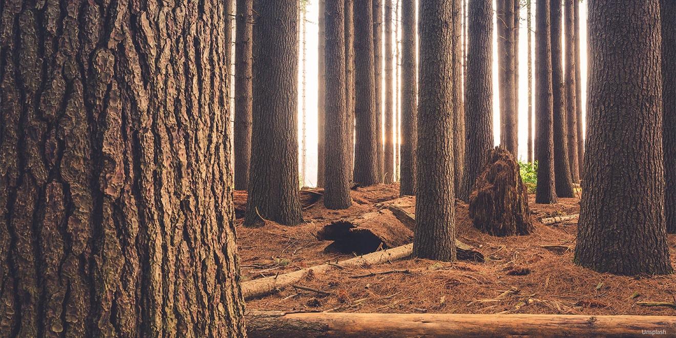 Den Stoff Loycell gewinnt man aus Zellulose, das sich bspw. in Holz befindet.